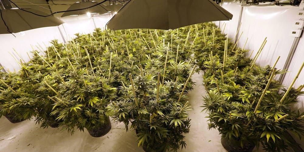 Какая нужна лампа для выращивания марихуаны старая песня про марихуану