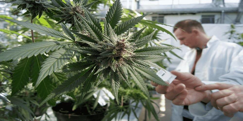 Воздействие марихуаны на давление ввс фильм о марихуане
